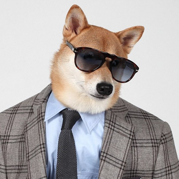 DogAgency