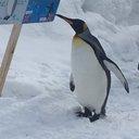 ペンギン(884)