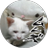 くぼたゆん@ゆん子 kubota_yunyun のプロフィール画像