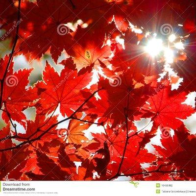Красный листопад (@vituss122)