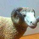 大羊(たいよう)