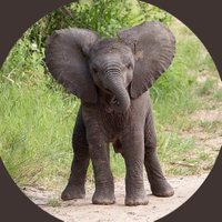 @elephant123455