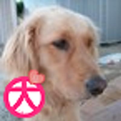 リリーの姉 | Social Profile