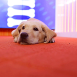 RT @WranglerTODAY: please don't ask me about the colors of that dress! http://t.co/AZNI6igFue