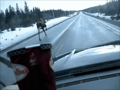 """""""@Tanya_Chen: And the most painfully Canadian.gif goes to http://t.co/1Kc36KtJPt"""" @JohnThomasWFTS Hahahaha"""