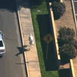 LLAMA CHASE happening in Arizona right now: http://t.co/tWNwgOk802