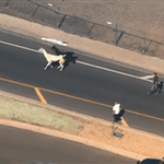 """@washingtonpost: Two llamas are on the run in Arizona http://t.co/kw5OWrNzSo http://t.co/fhb3wg52cD"" run llamas RUN!!!!!!!!"