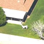 RUN RAMPANT YOU LLAMAS MT @Brosner85: Llamas on the loose in Sun City, Arizona Watch live http://t.co/BOJDAnHNh5 http://t.co/d8VY6U9FOw