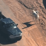 the fact that they just caught a llama with a LASSO is the most american thing ever http://t.co/tTQI9yfVKj
