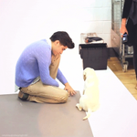 ZAYN PLAYING WITH A PUPPY IS STILL THE CUTEST THING EVER http://t.co/LMfiF1FL3u