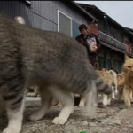 Less than purr-fect... Japanese island gets taken over by out-of-control cats. Read more: http://t.co/6ECuDWJazT http://t.co/LZLm1xOCSc