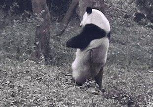 Panda panda panda 🐼#3wordsbetterthanIloveyou https://t.co/XNtJySrrSj