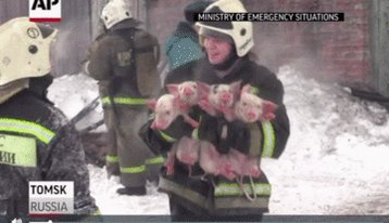Watch these firefighters carry bundles of piglets out of a burning barn 🐷🙏 https://t.co/XA1n5Wc3T5