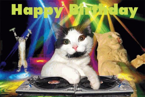 Happy Birthday, and ! Enjoy this funny cat GIF.