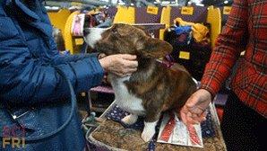 Happy #NationalPuppyDay! Celebrate with canine science. https://t.co/1UwE8ik487