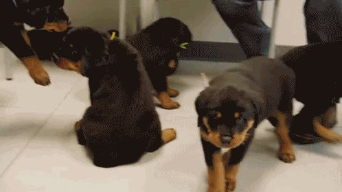 RT @AnimalPlanet: You're not sick of puppies yet, are you? #NationalPuppyDay™ https://t.co/glX0R0tkSa