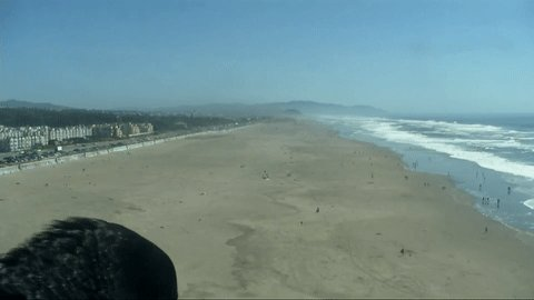 COOL CROW: Our @cliffhousehotel camera caught a crow who decided to hang out at #OceanBeach Friday afternoon