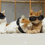 Bonjour! Il va faire beau aujourdhui. Ne sortez pas sans vos lunettes de soleil #PointMétéo http://t.co/Z0B07rBBLt http://t.co/eiVzhB7n01