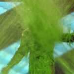 Of course the #KCA wouldnt have been complete without host @NickJonas getting slimed! http://t.co/HhATT7IPpX