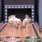 "#GoGreen ""@FallonTonight: Our puppies predict the 2015 Final Four champion! https://t.co/lFhRlqVpIL #FallonTonight http://t.co/KDcoZQvNaV"""