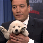Jimmys panel of puppies pick who they think will win this years Final Four Championship! https://t.co/sF2STpbXc8 http://t.co/jqtDk7d61Q