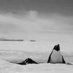 "#Pens RT ""Penguins return to the ice for the 3rd period. Game back on. Do or die. LET'S GO PENS! http://t.co/BJSjL17rd0 "" #SportsRoadhouse"