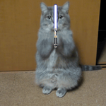 May the fourth be with you...????-> http://t.co/Flq87WOMJO http://t.co/JIBLQeDJyI