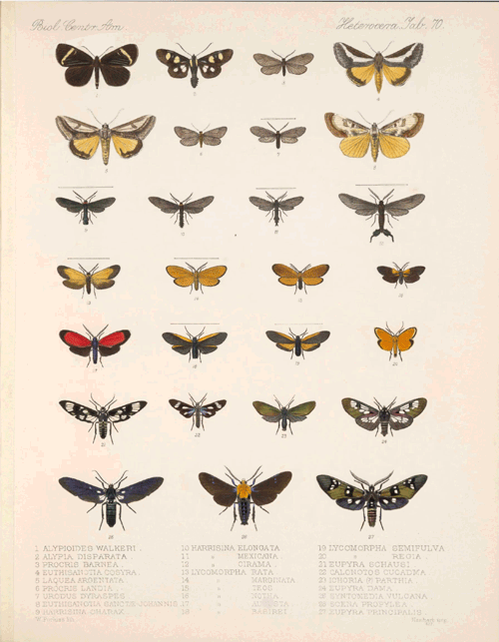 #NationalMothWeek = great excuse to make a #GIF out of something from our Galaxy of Images: http://t.co/IPwgKxstmc http://t.co/DNfZhzRknY
