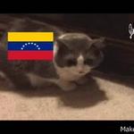 La #Crisis de #Venezuela y la #Inflacion explicada con gatos http://t.co/NkAG5fB5Vy