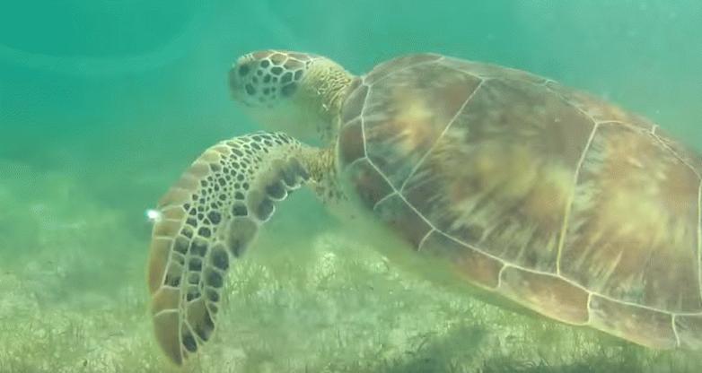 #HoyNecesitariaQue Todos se sumaran a la conservación de las tortugas marinas usando el HT #Tortugatón. http://t.co/48qyNFagCt