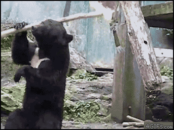 What time is it?  Ninja bear time. http://t.co/9c7as9vUGV