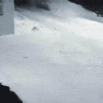 — Чёрт, Сэр? — Да. — Вы не видели куда они побежали? — Вон туда. — Спасибо, приятель! https://t.co/8XBbrzLU77