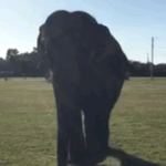 Meet Essex the elephant, who may have stolen the show today from @realDonaldTrump https://t.co/MeJ11MVyDt https://t.co/mLcgKyS15N