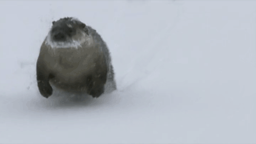 Heading out of work like... #FridayFeeling #Snowzilla2016 https://t.co/UozFH7NqUW
