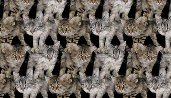 Here's a wall of kittens https://t.co/yW7v4kU6GG