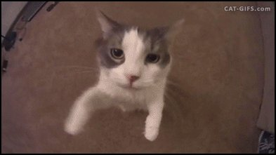 RT @peta: RT if your best friend has four legs ❤️ #AdoptDontBuy https://t.co/48AZCsdJcG