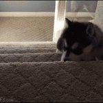 Восхождение по карьерной лестнице. https://t.co/dx5PcMKwZG