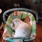이 동영상은 고양이가 사실 다 큰 아기나 다름없다는 증거다 https://t.co/C5Tz6o5XR0 https://t.co/Y5kNHfxD0c