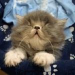 If Ben Carson were a cat right now https://t.co/tnhr2LUFeB
