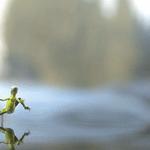 El basilisco es una especie de lagarto, que se desplaza por el agua a gran velocidad sin hundirse. https://t.co/VDv4HjQSkv
