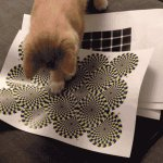 Interesting and cute gif. The rotating snakes illusion appears to work in cats. #caturday https://t.co/nTZaE3TPuJ https://t.co/BQj3UMOy5B