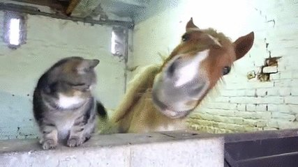 """""""Don't move, I have an itch."""" #GIFparty #BFFs https://t.co/OI7Kg2R7YS"""