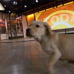 RT @WranglerTODAY: Did somebody say #GIFparty?! https://t.co/GZBmPd9wGd