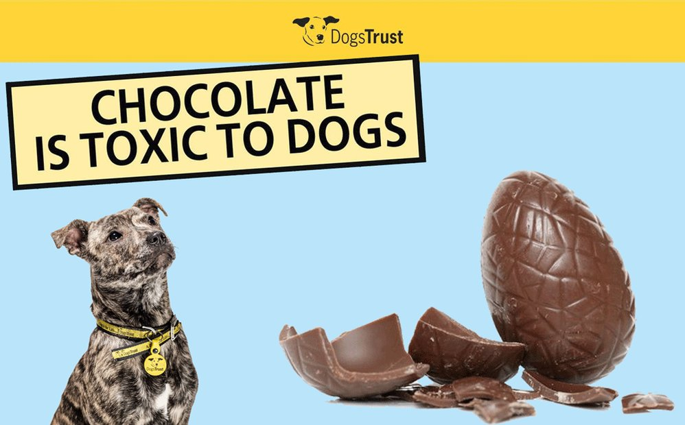 This #Easter please consider the dangers of feeding chocolate to your dog or leaving it out for your pet to pinch! https://t.co/B8tThuXs5S