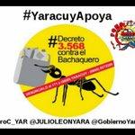 Vamos #YaracuyApoya total, absoluta, irrevocable con @NicolasMaduro  @JULIOLEONYARA y la REVOLUCIÓN BOLIVARIANA https://t.co/Hvsu1syDrJ