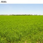 La agricultura es una de las principales actividades económicas de #Chihuahua, con productos de gran calidad https://t.co/LR1JsAA7Ne