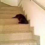 【さすが先輩】ナメクジのように階段を下りるネコ 「何度も見てしまう」などの声あがる https://t.co/3G6KEEyBTG  体をくねらせて1段1段ヌルヌルと這うように下りてくる。その姿に、多くの人が目が離せない模様。 https://t.co/rAa9z2YpeM
