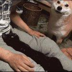 犬動画に見せかけた猫動画 https://t.co/E0RqOJBvCT