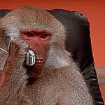 """Aye the zoo got me on hold bruh, we gone have to ride up there."" https://t.co/iVAUWUOnuF"