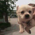 você bobeou e o dog voador passou bem no meio da sua timeline https://t.co/Qm4aGGk3fq